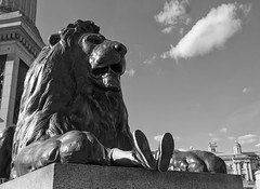D7K_3712_ep_gs (Eric.Parker) Tags: uk england bw london statue bronze europe britishisles britain lion trafalgarsquare 2013