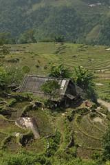 Sapa Hike Impressions V (jan-one) Tags: mountain nature field rice hike vietnam sapa vnm làocai