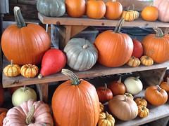 Wegman's pumpkins (KFiabane) Tags: newyork wegmans ithaca