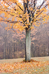 Falling Apart (Chancy Rendezvous) Tags: foliage tree morning leaves autumn fall fallingapart falling apart davelawler blurgasm blurgasmcom davidclawler chancyrendezvous