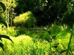 IMG_0286 b August (Traud) Tags: germany deutschland bavaria bayern naturschutzakademie garten garden pool teich grün gras sommer august steg