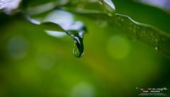 Life & Nature ...... ජීවය සහ ස්වභාවධර්මය......