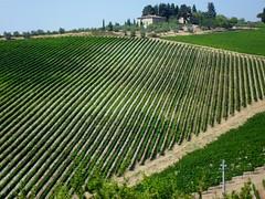 Maremma (Valentina Conte) Tags: verde file vineyards fields toscana righe maremma geometrie colle vigneti