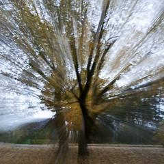 fall 4 (Rambynas) Tags: autumn tree fall colors lithuania lietuva camerapainting cameramotion