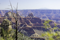 51. View from Widforss Point in Grand Canyon (surfneng) Tags: trees sky canyon northrim grandcanyonnationalpark brightangelcanyon widforsspoint widforsstrail