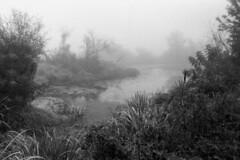 Misty oxbow lake (Other dreams) Tags: wild blackandwhite bw mist film nature misty fog analog 35mm landscape natural ngc foggy analogue vistula oxbow pristine fomapan100 nikonfm fomapan nikkor28