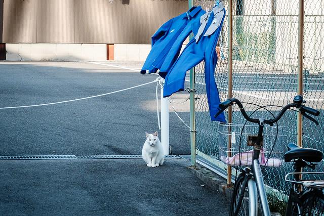 Today's Cat@2014-10-19