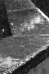 _MG_8361 (sir_mac_alot66) Tags: water beautiful droplets amazing fotografie grayscale fotografia blackandwhitephotography fotografa   fotograph fotoraflk