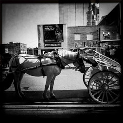 Putting The Cart In Front of The Horse   [Explored] (Tom Frundle) Tags: street city horse downtown cityscape carriage unitedstates nashville tennessee broadway streetphotography explore squareformat popular bnw nashvilletn musiccity explored flickrexplored iphone6 hipstamatic