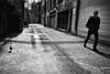 @ | @ (. Jianwei .) Tags: street urban bird vancouver blackwhite backstreet nex kemily