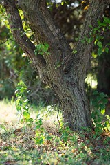 Nature's garland (Kay Martinez) Tags: light portrait tree nature leaves sunshine canon garland kansas cchs ef135mmf20