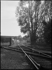 Croisement (ben1chka) Tags: france train strasbourg rails arbre basrhin ilfordpanfplus rodinal125 mamiya645j fomadonr09125 sekor80mm19 filmdev:recipe=9698