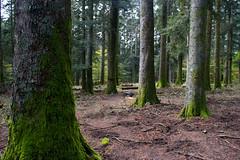 Verso Camaldoli (Ozma87) Tags: italy mountains path sacre monks tuscany sentiero tosco montagna emiliano monastero appennino camaldoli foresta monaci foreste sentieri romagnolo casentinesi