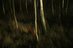 (Souran.K) Tags: tree canon autum autumnal icm intentionalcameramovement souran