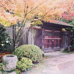 Japanese garden back gate