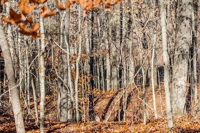 Pizzo Preserve - November 1, 2014