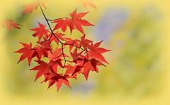 On Explore 9 Nov 2014 (kyuen13) Tags: