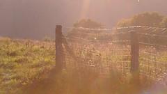 (All Shine) Tags: light fence sunny rays shining