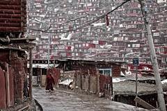 141003_SD-113 (daviddu*) Tags: snow tibet 西藏 四川 佛學院 色達 色達喇榮五明佛學院