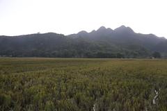 _MG_0593 (liem.ionetour) Tags: travel beautiful landscape nice asia tour du vietnam tay viet mai re gia dep sapa nam bac chau ione maichau dulich mocchau taybac hapdan ionetour
