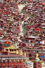 141002_SD-121 (daviddu*) Tags: tibet 西藏 四川 佛學院 色達 色達喇榮五明佛學院