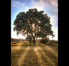 Bona tarda (christian&alicia) Tags: tree nature landscape arbol sigma natura paisaje catalonia catalunya maresme sant arbre hdr paisatge mateu catalogne nikond40x christianalicia