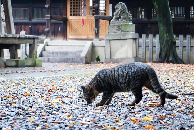 Today's Cat@2014-10-27