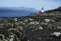 Discovering Lighthouse (Reiterlied) Tags: sea lighthouse beach washington unitedstates lego alki minifig minifigure whitecenter legography