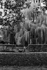 (der_w) Tags: street people urban bw river shift tilt fluss neckar tse personen tübingen tiltshift badenwürttemberg schwarzweis tse90mm flus neckarinsel streetfotography