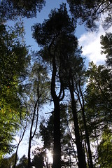 Nature (joe_barton17) Tags: trees tree nature canon kitlens 1855mm naturephotography canoneos50d canon50d