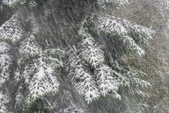 First Snow October 2014 (RalfK61) Tags: oktober 10 herbst alm steinberg 2014 herbstferien ruhpolding steinbergalm