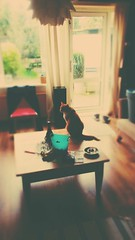 Chill (Peeano Photography - ピアーノ写真) Tags: cats cat home love warmth sweet peace