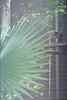 F1000016_lr (chi.ilpleut) Tags: singapore 2017 myday march outdoor outing film ilovefilms shootfilm kodakfilm expiredfilm jurongbirdpark birds seeing greenery ilovegreen analogue analog track grain