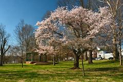 Muskingum Park Spring Landscape (thoeflich) Tags: muskingum park marietta ohio springlandscape
