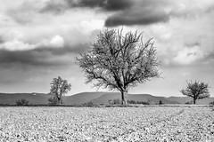 Three Tree Horizon... (Ody on the mount) Tags: anlässe bäume em5ii filmkorn fototour mzuiko4518 omd olympus pflanzen schwäbischealb wolken bw monochrome sw