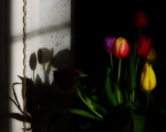 Black white and colour . (Laineyb93) Tags: shapes softfocus dark black white colour shadows light tulips flowers nikon d7000 mono colourful sunlight different adobe pattern leaves buds petals sunandshade