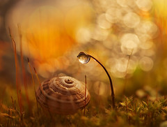 I've got my eye on you (miss gecko) Tags: macro dreams shell snail moss seed bokeh