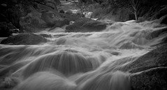 White rapids (Trace Connolly) Tags: australia australian australiasouthaustralia blackandwhite bw canon canon7d day digital environmentalphotography exposure environment flickr hiking landscape longexposure landscapephotography mannum monochromephotography nature naturephotography river rocks water waterfall waterfalls whitewater reedycreek creek tree light rapids whiteandblack