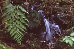 (Bernardo Guzman Roa) Tags: agua musgo helecho