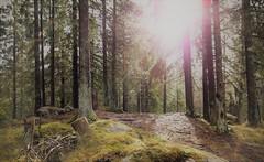 En liten glimt av solen (Anders Bromell) Tags: fs170226 liten fotosondag