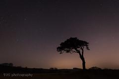 Lone Tree, Waldegrave Pool, Priddy, Somerset (T J G photography) Tags: somerset astro silhouette d610 tree 1424 nikon priddy star sky waldegrave stars nikkor longexposure astrometrydotnet:id=nova2006997 astrometrydotnet:status=failed