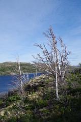 imgp3649 (Mr. Pi) Tags: trees lake mountains hills chile andes nationalpark patagonia torresdelpaine lagoskottsberg