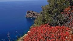 Sa Foradada (dreptacz) Tags: majorka skała hiszpania przylądek klif kwiaty krzewy wyspa krajobraz widok natura sony55 slt55 lustrzanka astoundingimage sonyflickraward