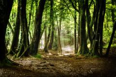 la foret (randomontgeron) Tags: foret nature arbres campagne ecologie troncs chenes feuille folliage vert saison printemps hiver automne sentier chemin vie air naturel environnement bretagne france europe