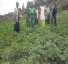 2017 Family in mulched potato field (Foods Resource Bank) Tags: foods resource bank frb world renew humanitarian food security smallholder agriculture development men women children community mulching conservation farming demo plots moisture retention soil fertility improvement yields beans maize potatoes cabbage vegetables