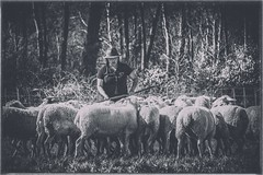 La bergère.... (Isa-belle33) Tags: moutons sheep woman human animal animals animaux nature trees arbres aquitaine gironde fuji fujifilm fujixt1