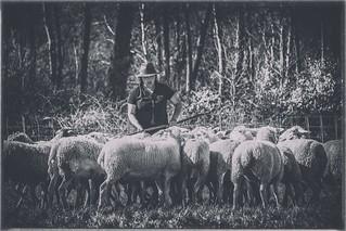 La bergère....