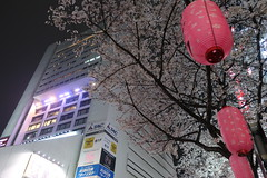 IMG_0530 (digitalbear) Tags: canon powershot g9x markii mark2 nakano dori sakura cherry blossom blooming fullbloom tokyo japan yozakura hanami