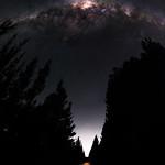 Milky Way between the Pines - Jarrahdale, Western Australia thumbnail