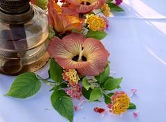 Flowers on the table (judy dean) Tags: maldives kuredu 2017 hibiscus flowers table dining